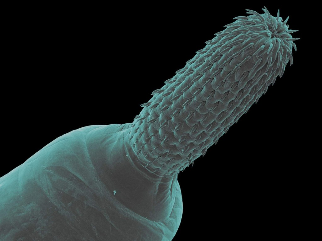 parazite_norsko_obr22