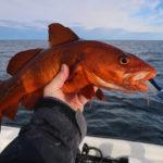 treska-obecna-cervena-forma-5-9-2020c